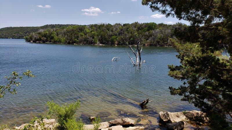 Ένα κλαδί δέντρων στη λίμνη βασίλειων possum στοκ φωτογραφία