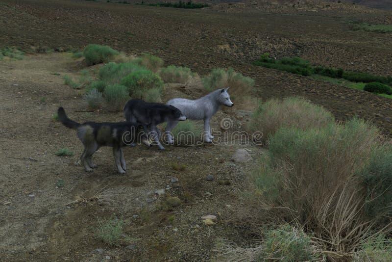 Ένα κοπάδι του κυνηγιού λύκων διανυσματική απεικόνιση