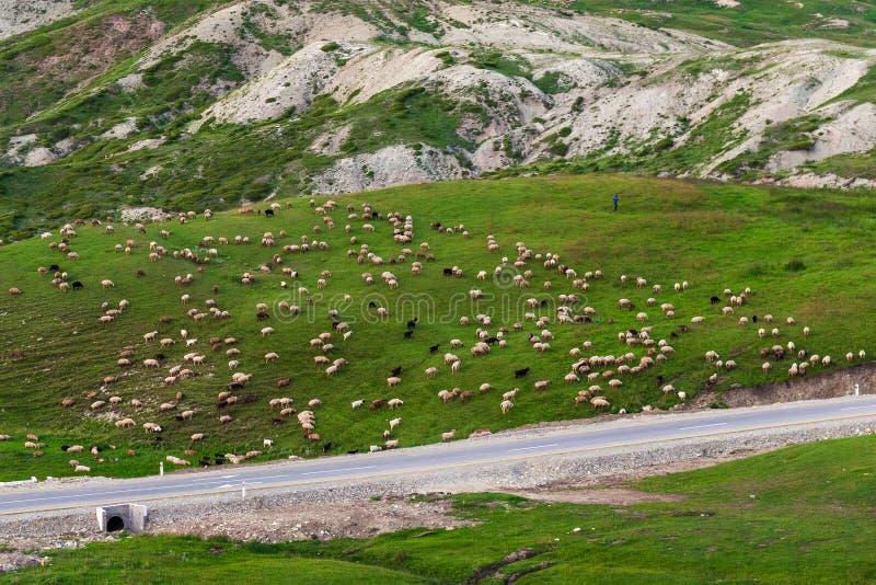 Ένα κοπάδι των προβάτων mountainside στοκ φωτογραφίες με δικαίωμα ελεύθερης χρήσης