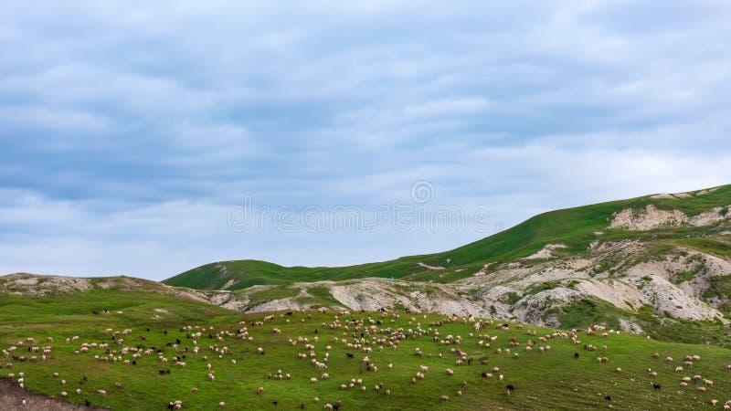 Ένα κοπάδι των προβάτων mountainside στοκ εικόνες με δικαίωμα ελεύθερης χρήσης