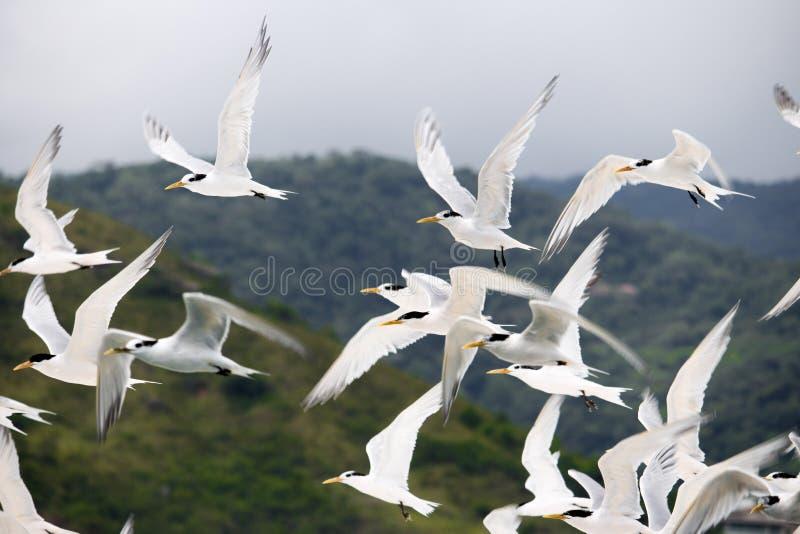 Ένα κοπάδι seagulls στοκ εικόνες