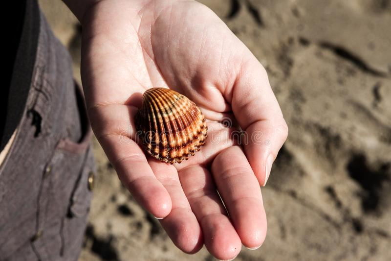 Ένα κορίτσι κρατά τη Shell σε ετοιμότητα της στοκ φωτογραφία
