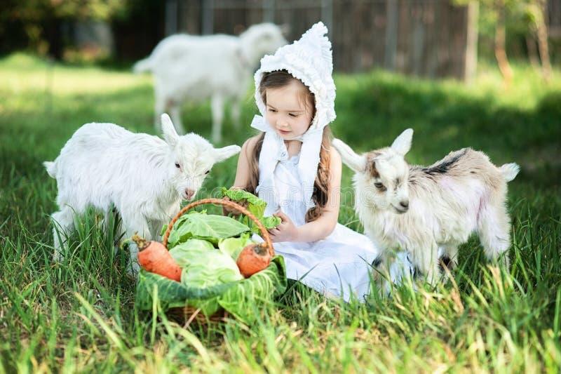 Ένα κορίτσι ποιμένων σε ένα άσπρα φόρεμα και ένα καπό ταΐζει μια αίγα με τα φύλλα λάχανων στοκ εικόνα