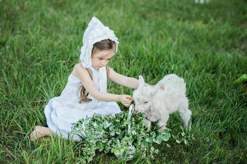 Ένα κορίτσι ποιμένων σε ένα άσπρα φόρεμα και ένα καπό ταΐζει μια αίγα με τα φύλλα λάχανων στοκ φωτογραφία με δικαίωμα ελεύθερης χρήσης