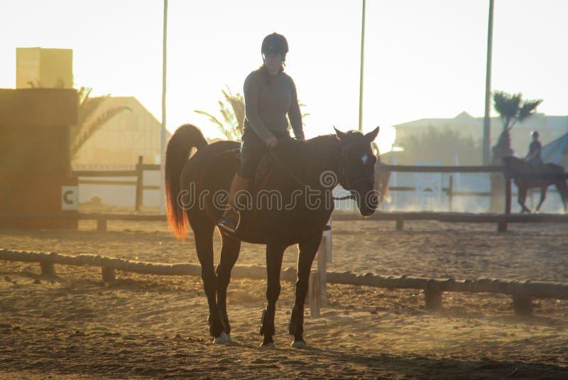 ένα κορίτσι που συμμετέχει στον ιππικό αθλητισμό κάθεται στην πλάτη αλόγου στο ηλιοβασίλεμα στοκ φωτογραφίες