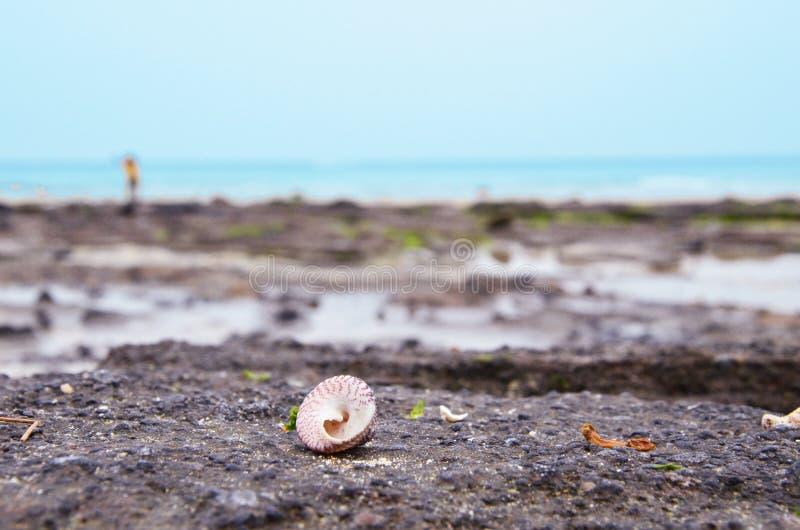 Ένα κοχύλι στην παραλία στοκ εικόνες με δικαίωμα ελεύθερης χρήσης