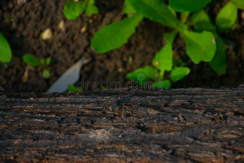 Ένα κούτσουρο που βρίσκεται στο χλοώδες έδαφος στοκ εικόνα