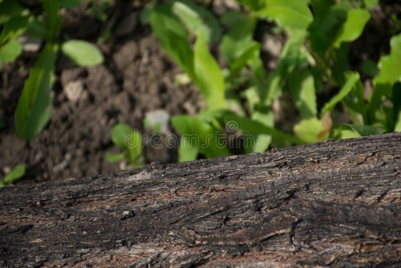 Ένα κούτσουρο που βρίσκεται στο χλοώδες έδαφος στοκ φωτογραφία με δικαίωμα ελεύθερης χρήσης