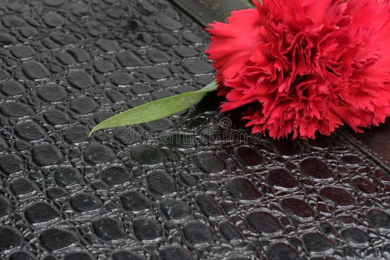 ένα κόκκινο γαρίφαλο και ένα σημειωματάριο στοκ φωτογραφία με δικαίωμα ελεύθερης χρήσης