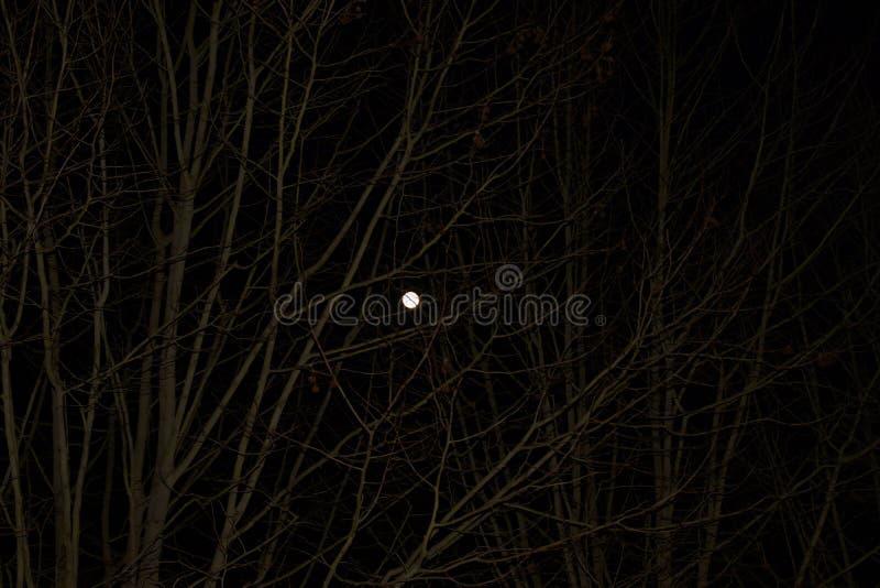 Ένα λαμπρό σεληνόφωτο - που βλέπει από απόσταση στοκ εικόνα