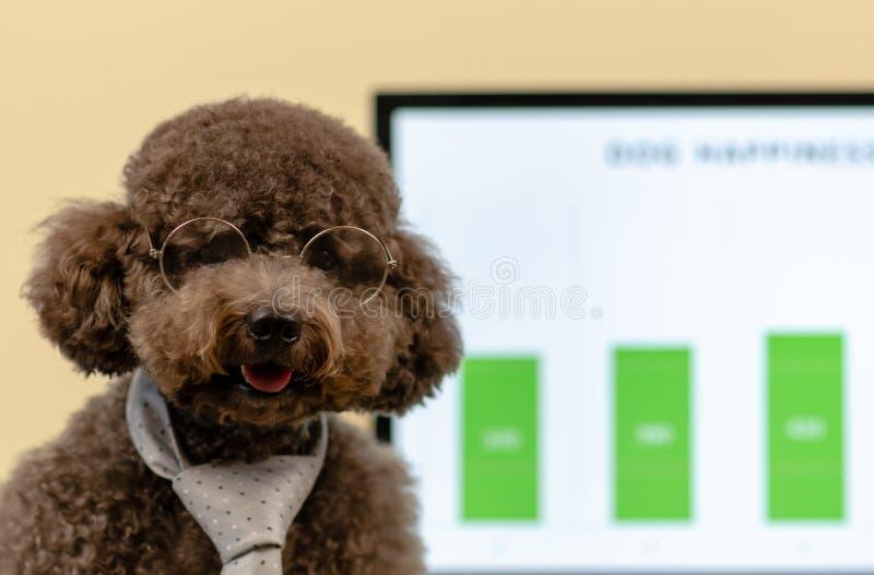 Ένα λατρευτό μαύρο Poodle παιχνιδιών σκυλί που φορά τη γραβάτα και τα γυαλιά με την έννοια ότι το σκυλί μπορεί να πάει στο χώρο ε στοκ εικόνα