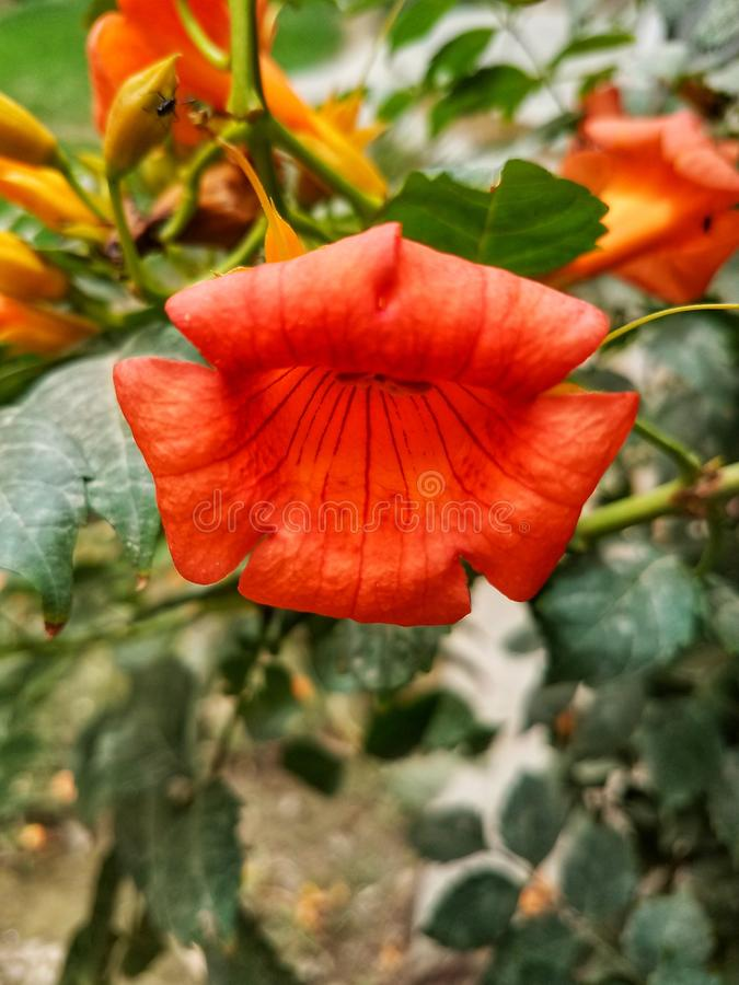 Ένα λουλούδι του μοναδικού χρώματος στοκ εικόνα