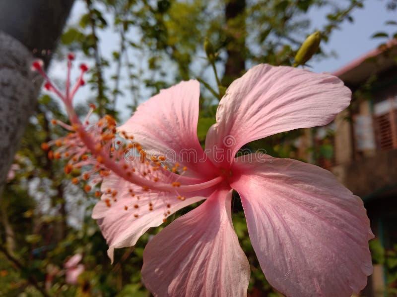 Ένα λουλούδι των εγκαταστάσεων στιλβωτής στοκ φωτογραφία με δικαίωμα ελεύθερης χρήσης