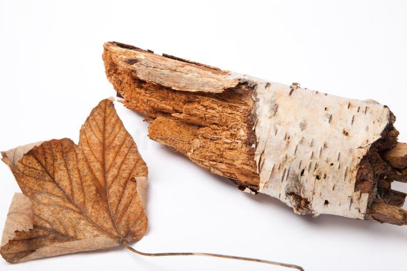 Ένα μαραμένο φύλλο εκτός από το δέντρο SOM στοκ φωτογραφία με δικαίωμα ελεύθερης χρήσης