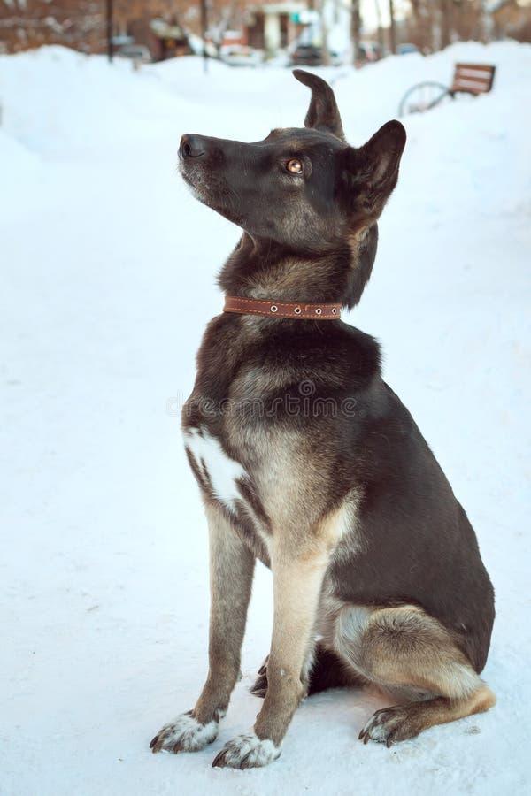 Ένα μεγάλο καφετί σκυλί κάθεται σε ένα πάρκο στο χιόνι στοκ φωτογραφία με δικαίωμα ελεύθερης χρήσης