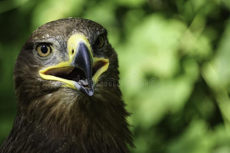 Ένα μεγάλο πουλί του θηράματος σε ένα πράσινο φυσικό υπόβαθρο στοκ φωτογραφίες με δικαίωμα ελεύθερης χρήσης