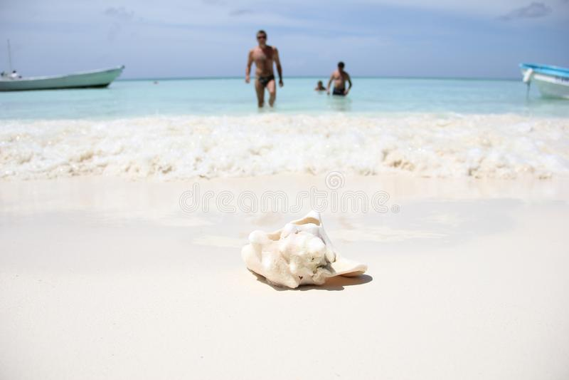 Ένα μεγάλο ωκεάνιο κοχύλι των ρόδινων από μάργαρο gigas Strombus βρίσκεται στην άσπρη άμμο στην καραϊβική θάλασσα στο νησί στοκ φωτογραφία με δικαίωμα ελεύθερης χρήσης