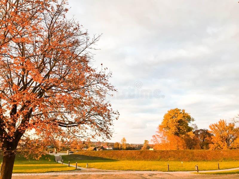 Ένα μεγάλο όμορφο φυσικό δέντρο με σκουπίζοντας κλάδους τους παχιούς κορμών, το κόκκινο και κίτρινο πεσμένο φθινόπωρο φεύγει Τοπί στοκ εικόνα