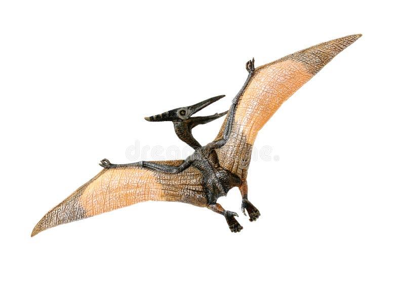 Ένα μικρές κόκκινες και κίτρινες μέτωπο και μια πλάτη παιχνιδιών Pterodactyl που κοιτάζουν στο αριστερό του στοκ φωτογραφία