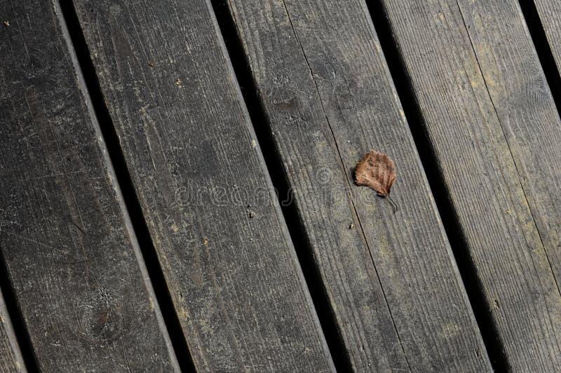 Ένα μικροσκοπικό μόνο φύλλο ξύλινα floorboards στοκ φωτογραφία με δικαίωμα ελεύθερης χρήσης