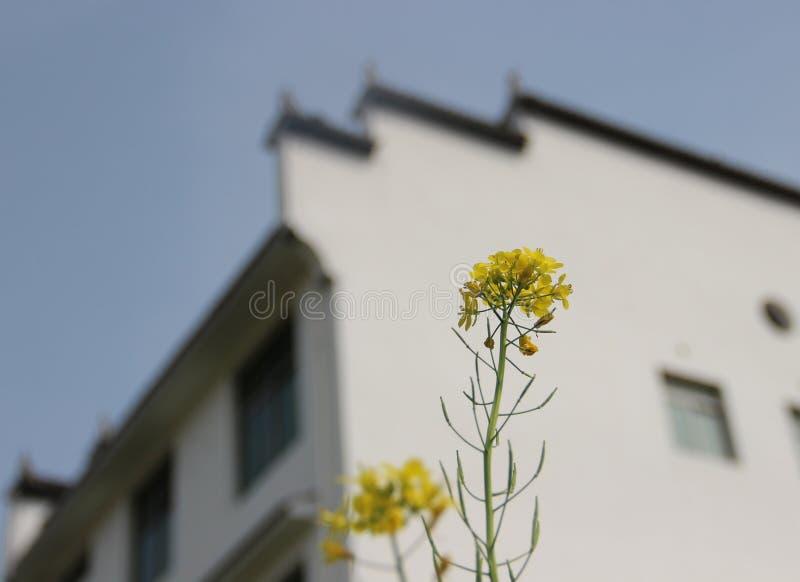 Ένα μικροσκοπικό λουλούδι μπροστά από ένα σπίτι στοκ φωτογραφία με δικαίωμα ελεύθερης χρήσης