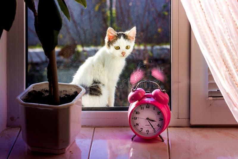Ένα μικρό άσπρο γατάκι κάθεται στην οδό κοντά στο παράθυρο και θέλει στοκ φωτογραφίες