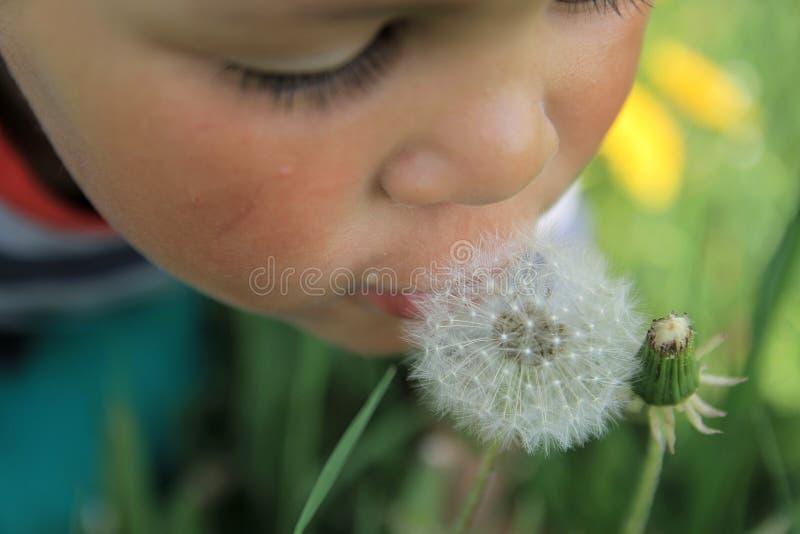Ένα μικρό αγόρι που μυρίζει μια πικραλίδα στοκ φωτογραφίες