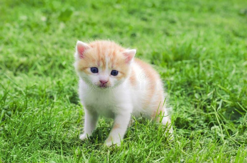 Ένα μικρό γατάκι υπαίθριο στην πράσινη χλόη στοκ φωτογραφία