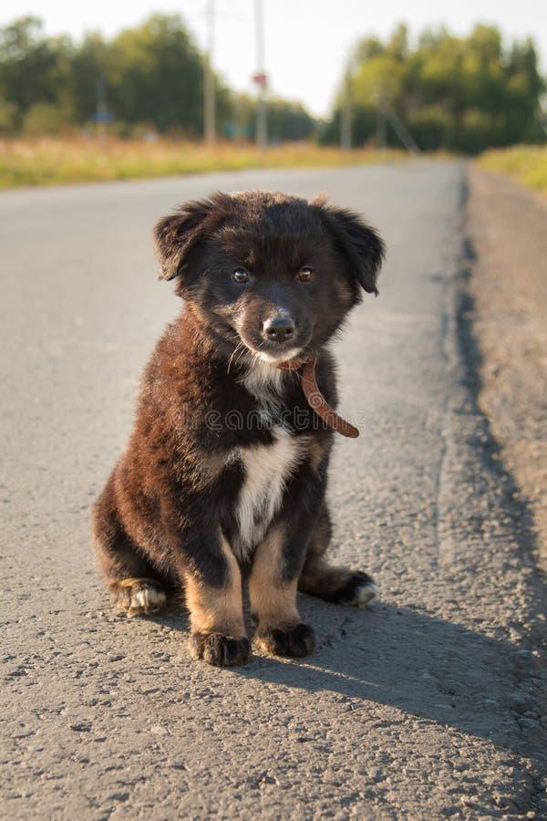 Ένα μικρό δασύτριχο κουτάβι κάθεται σε έναν δρόμο ασφάλτου στοκ εικόνες