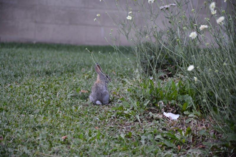 Ένα μικρό κουνέλι στη χλόη στοκ φωτογραφίες με δικαίωμα ελεύθερης χρήσης