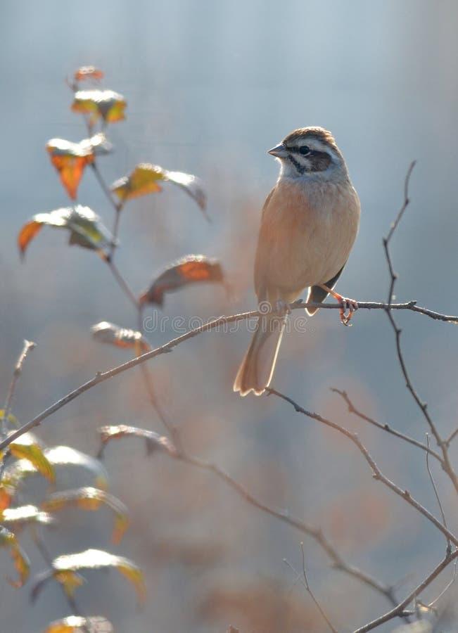 Ένα μικρό πουλί στοκ εικόνες με δικαίωμα ελεύθερης χρήσης