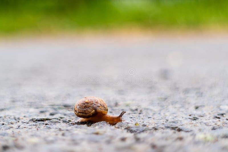 Ένα μικρό σαλιγκάρι σέρνεται πέρα από το δρόμο, ένα σκηνικό της πράσινης χλόης στοκ φωτογραφίες με δικαίωμα ελεύθερης χρήσης