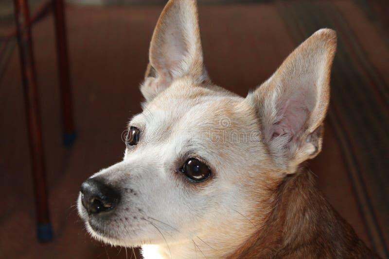 Ένα μικρό σκυλί στοκ φωτογραφία
