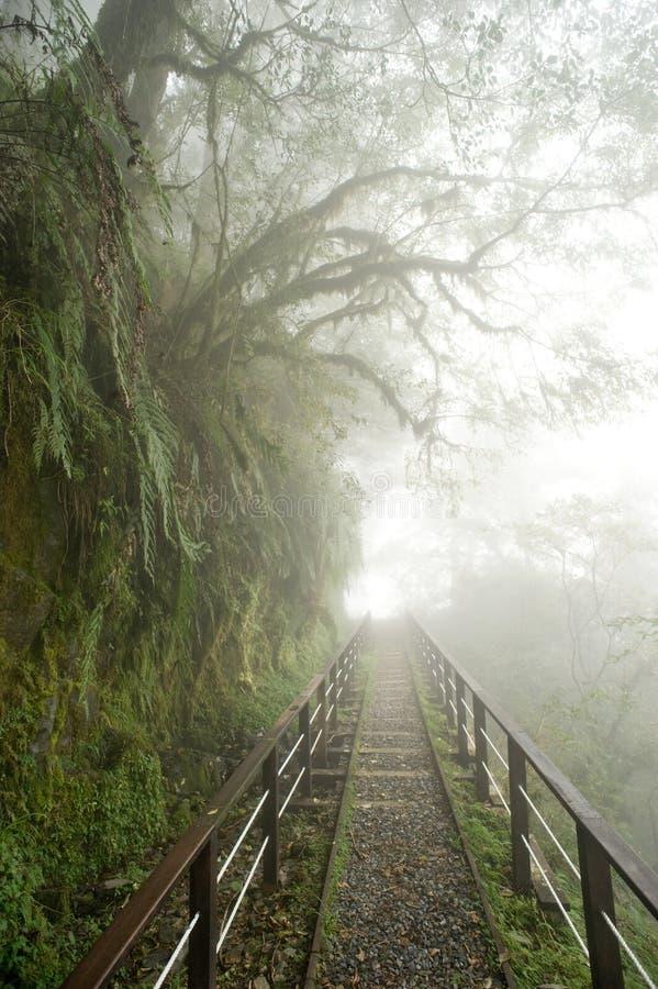 Ένα μονοπάτι στο misty δάσος στοκ φωτογραφίες με δικαίωμα ελεύθερης χρήσης