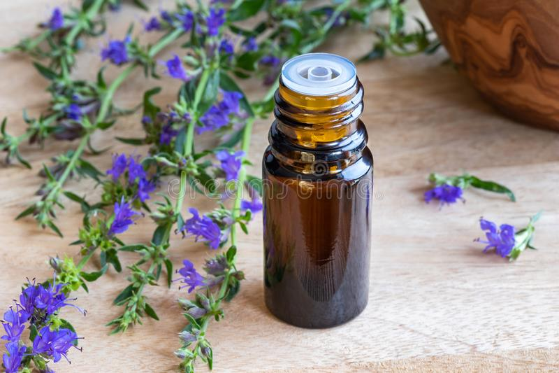 Ένα μπουκάλι του ουσιαστικού πετρελαίου hyssop με τη φρέσκια άνθιση hyssop στοκ εικόνες με δικαίωμα ελεύθερης χρήσης