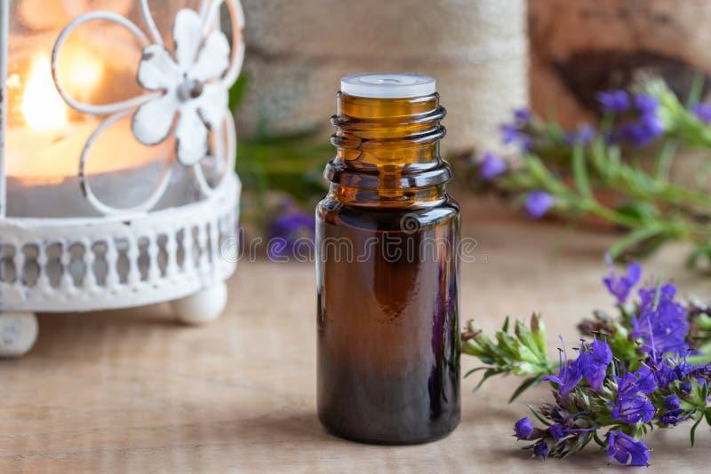 Ένα μπουκάλι του ουσιαστικού πετρελαίου hyssop με τη φρέσκια άνθιση hyssop στοκ φωτογραφίες