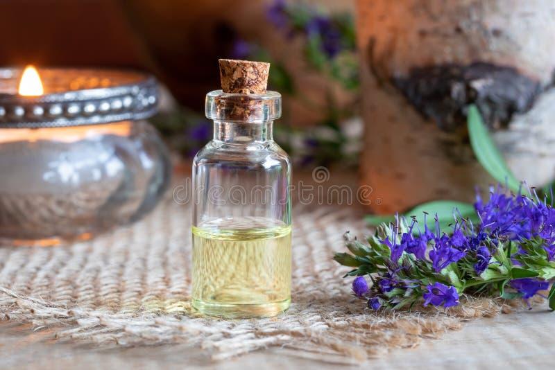 Ένα μπουκάλι του ουσιαστικού πετρελαίου hyssop με τη φρέσκια άνθιση hyssop στοκ εικόνα