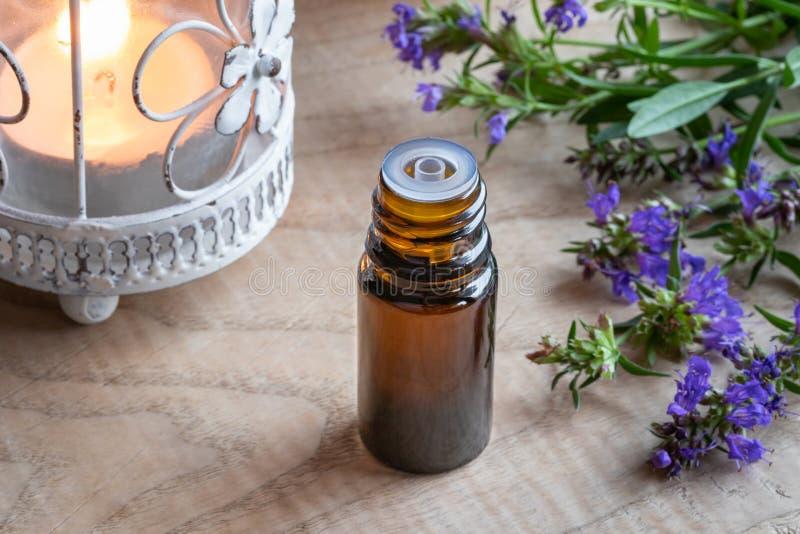 Ένα μπουκάλι του ουσιαστικού πετρελαίου hyssop με το φρέσκο hyssop στοκ φωτογραφίες με δικαίωμα ελεύθερης χρήσης