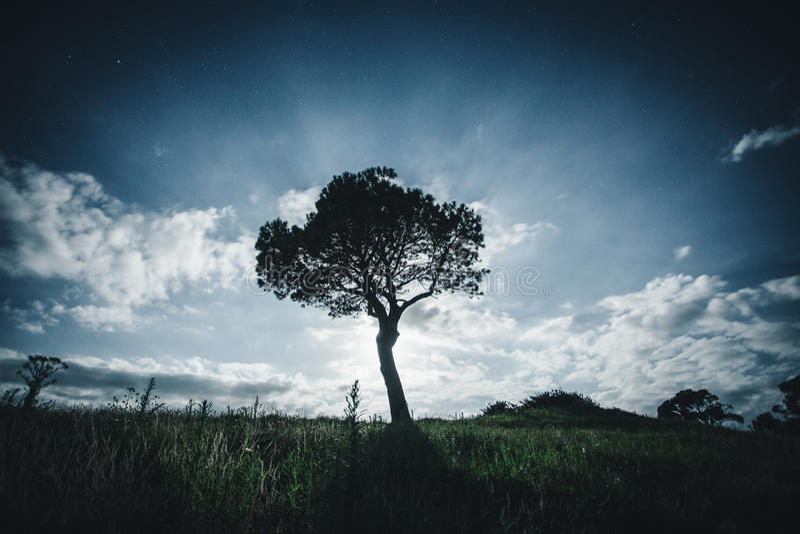 Ένα μόνο δέντρο τη νύχτα στοκ εικόνες με δικαίωμα ελεύθερης χρήσης