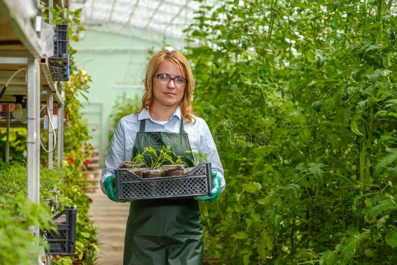 Ένα νεαρό κορίτσι εργάζεται σε θερμοκήπιο Βιομηχανική καλλιέργεια λαχανικών στοκ φωτογραφία με δικαίωμα ελεύθερης χρήσης