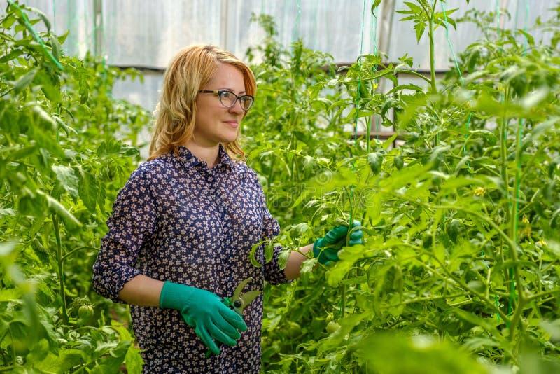 Ένα νεαρό κορίτσι εργάζεται σε θερμοκήπιο Βιομηχανική καλλιέργεια λαχανικών στοκ εικόνα με δικαίωμα ελεύθερης χρήσης
