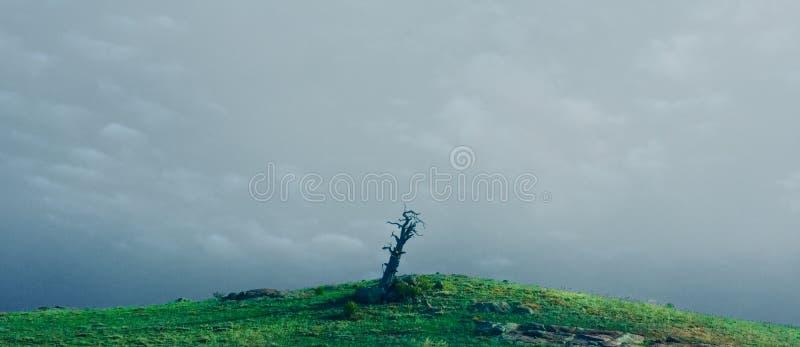 Ένα νεκρό δέντρο πάνω από έναν πράσινο λόφο στοκ εικόνα