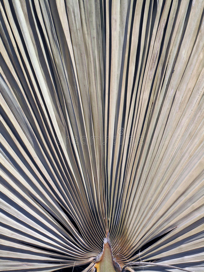 Ένα ξηρό φύλλο φοινικών στοκ φωτογραφίες