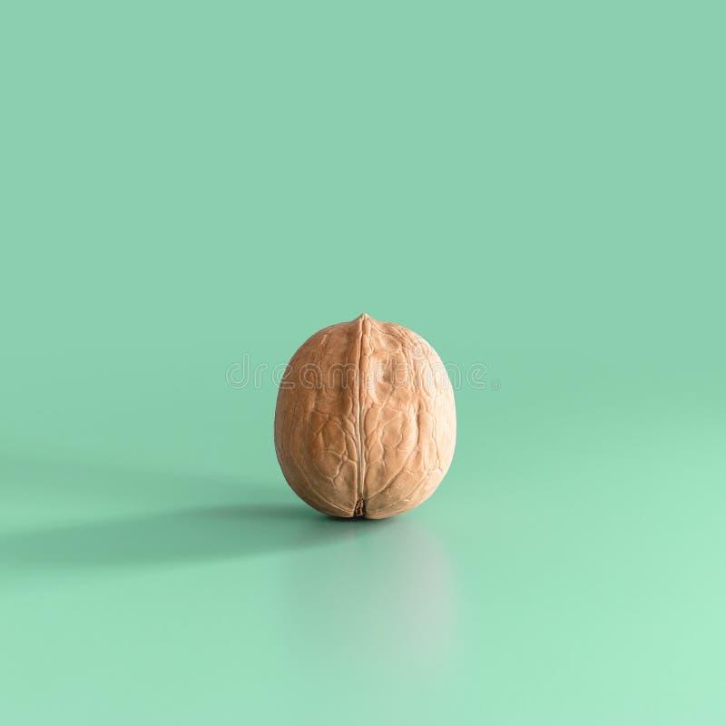 Ένα ξύλο καρυδιάς σε ένα πράσινο υπόβαθρο στοκ εικόνες με δικαίωμα ελεύθερης χρήσης