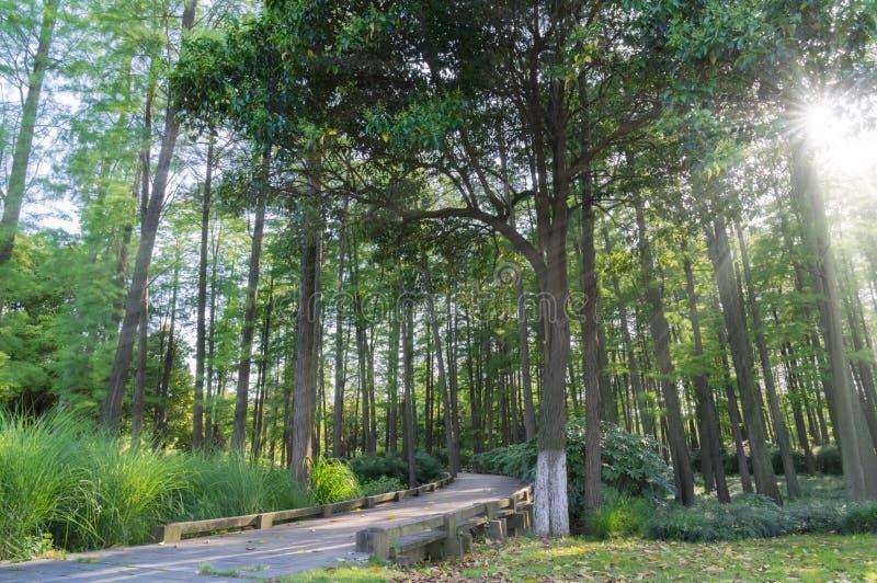Ένα ξύλο στην Κίνα στοκ φωτογραφία