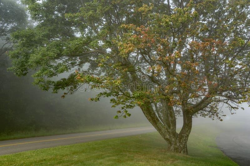 Ένα ομιχλώδες δέντρο στον μπλε χώρο στάθμευσης κορυφογραμμών στοκ εικόνα με δικαίωμα ελεύθερης χρήσης