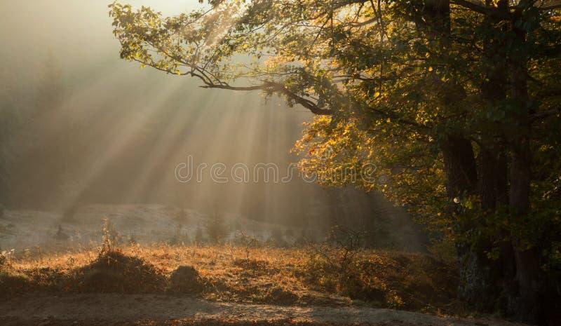 Ακτίνες ομίχλης και ήλιων πρωινού φθινοπώρου στοκ φωτογραφία με δικαίωμα ελεύθερης χρήσης