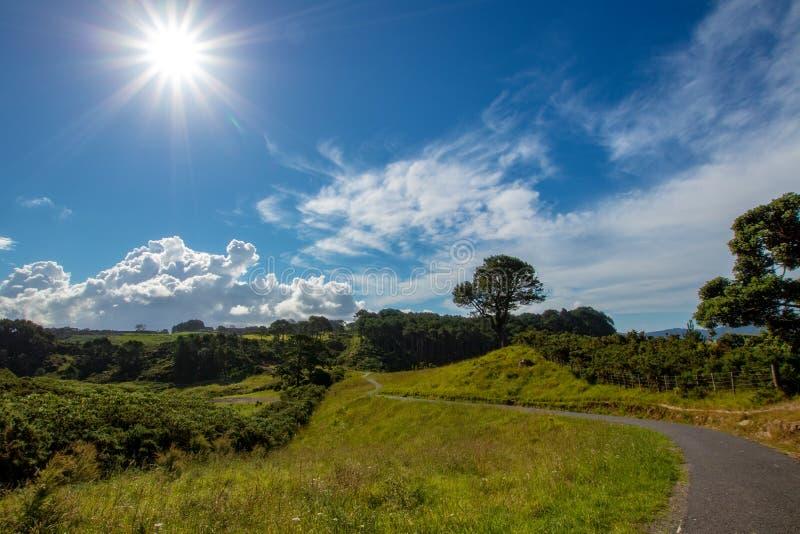 Ένα ονειροπόλο μονοπάτι στη Νέα Ζηλανδία μεταξύ των δέντρων και των μικρών λόφων με έναν όμορφο ουρανό στοκ φωτογραφία με δικαίωμα ελεύθερης χρήσης