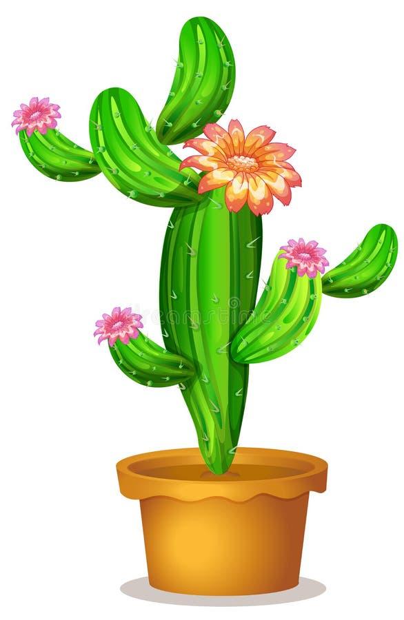 Ένα δοχείο με ένα ανθίζοντας φυτό κάκτων ελεύθερη απεικόνιση δικαιώματος