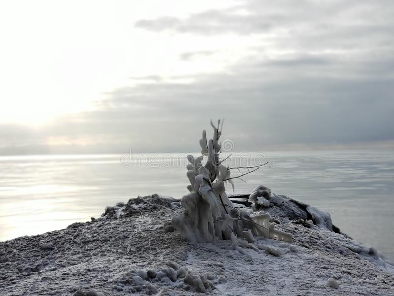 Ένα παγωμένο δέντρο κοντά στη λίμνη στοκ φωτογραφίες με δικαίωμα ελεύθερης χρήσης